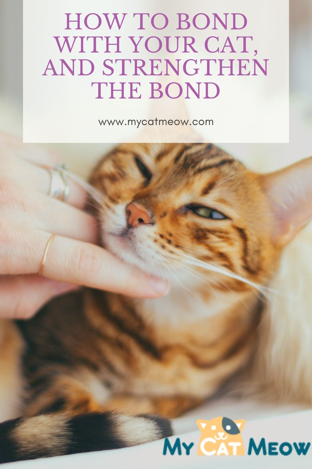How to Bond with your Cat, and Strengthen your Bond for a Lifetime