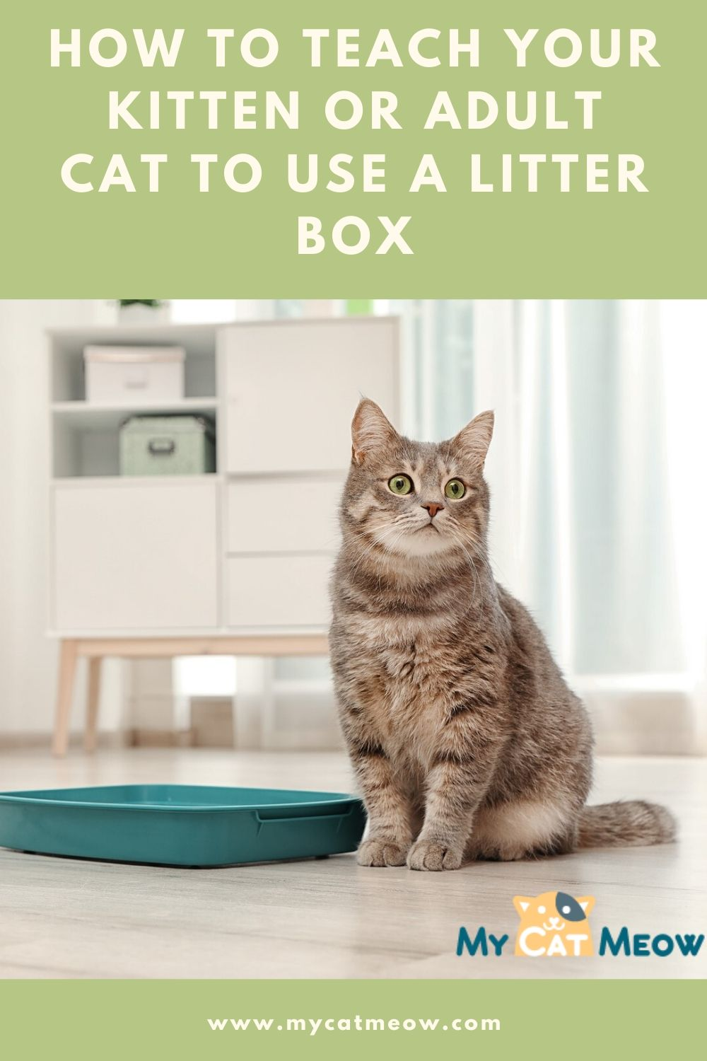 How to Teach your Kitten or Adult Cat to Use a Litter Box