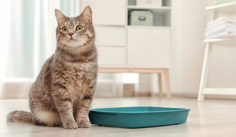 6 Effective Ways to Teach your Kitten or Cat to Use a Litter Box