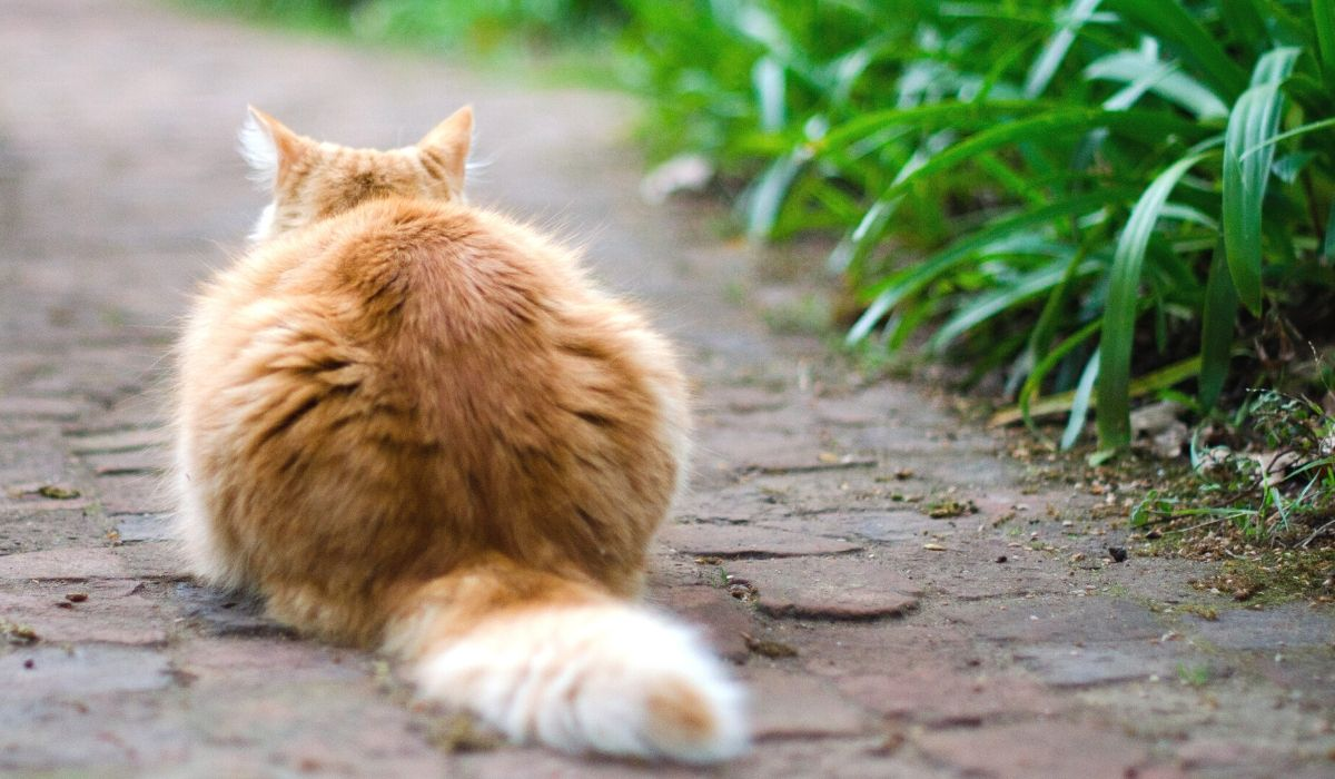 Toxic and Poisonous Plants for Cats