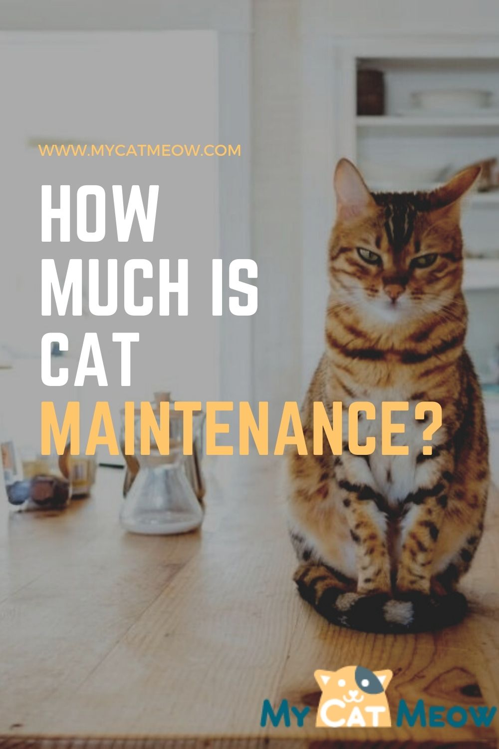 How much maintenance is a cat