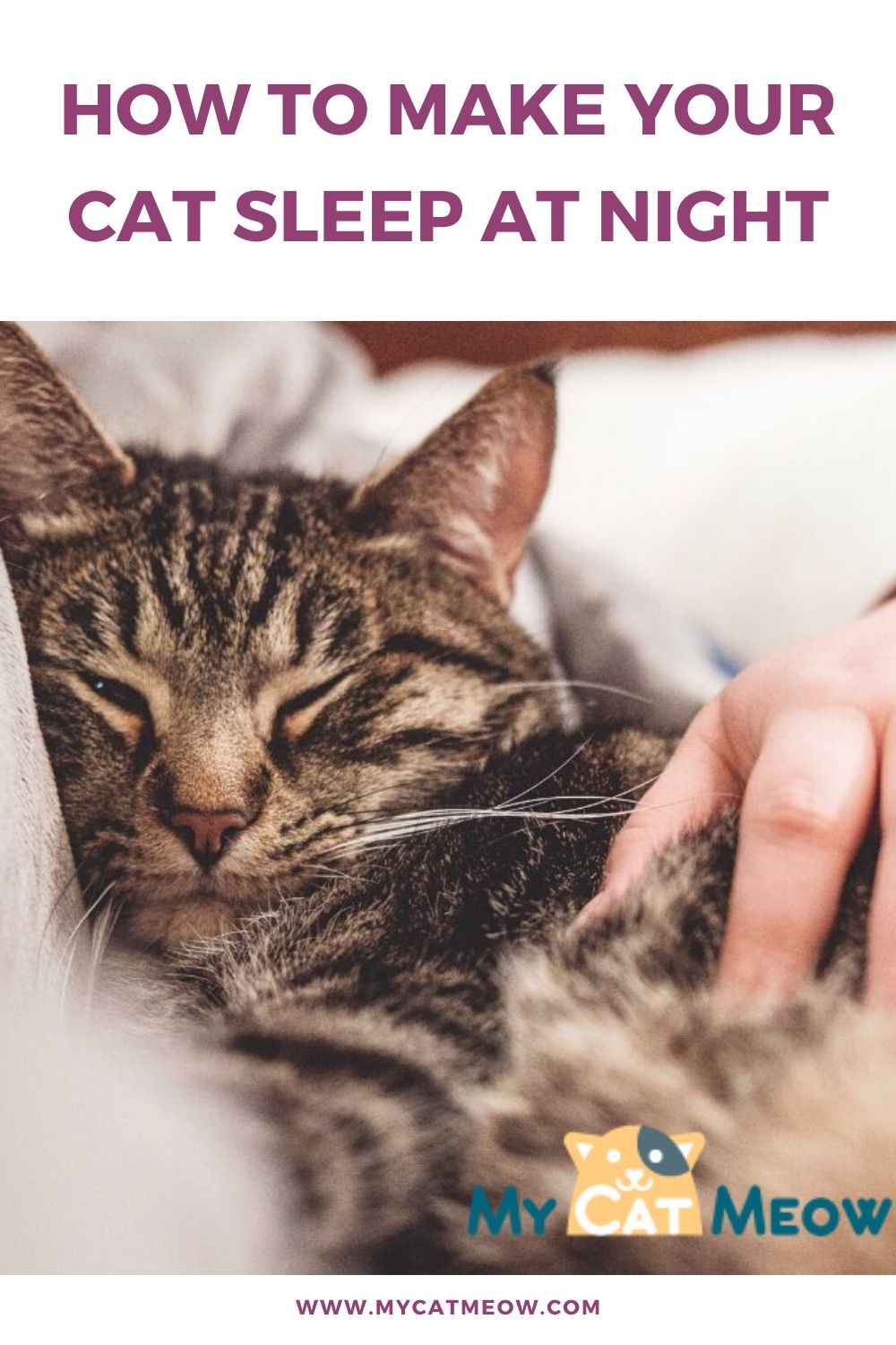How to make your cat sleep at night