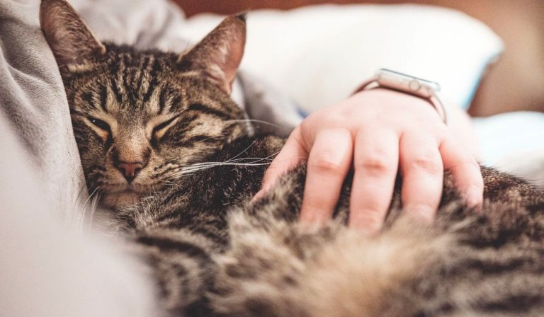 14 Effective Ways to make your Cat Sleep at Night