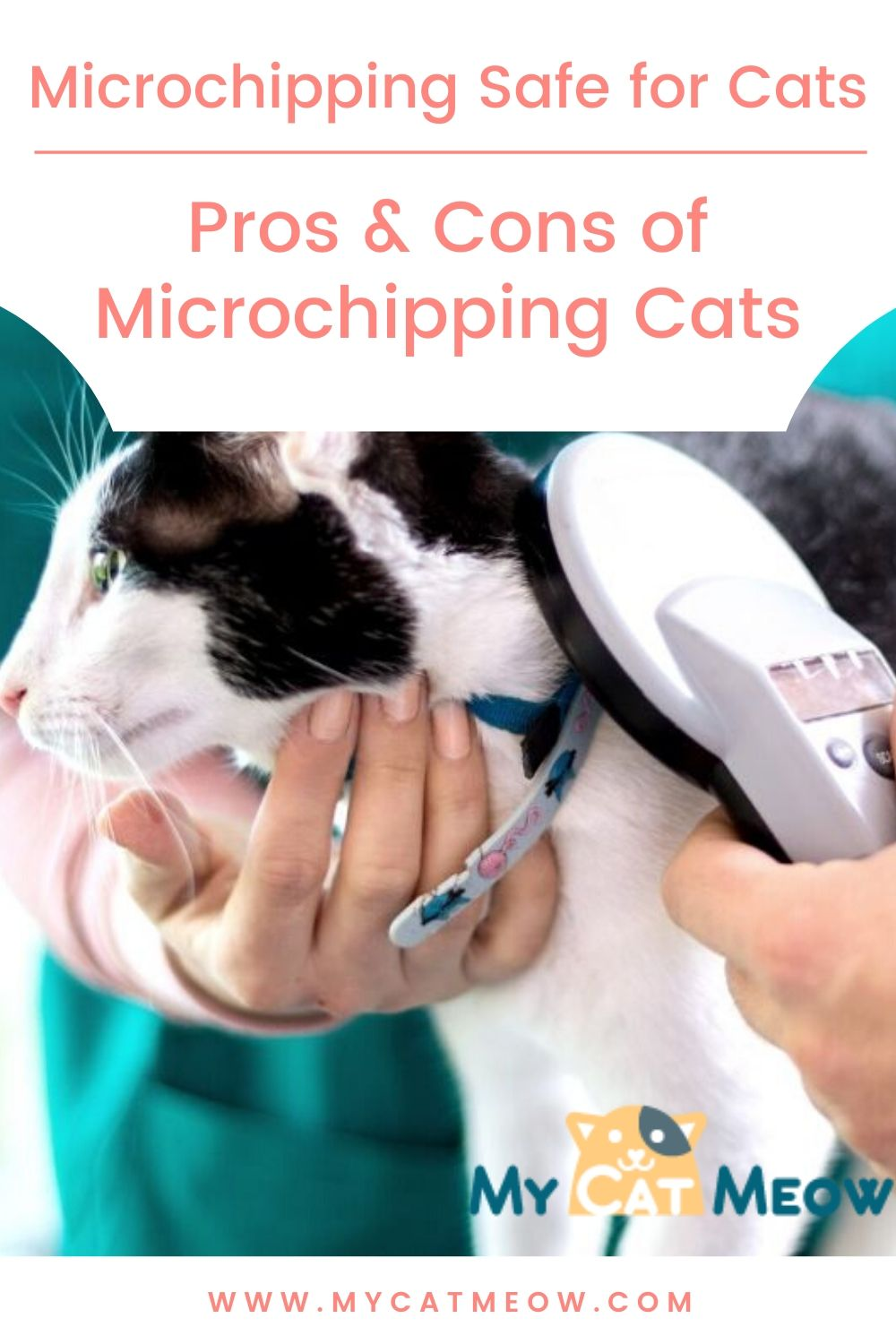 microchipping safe for cats