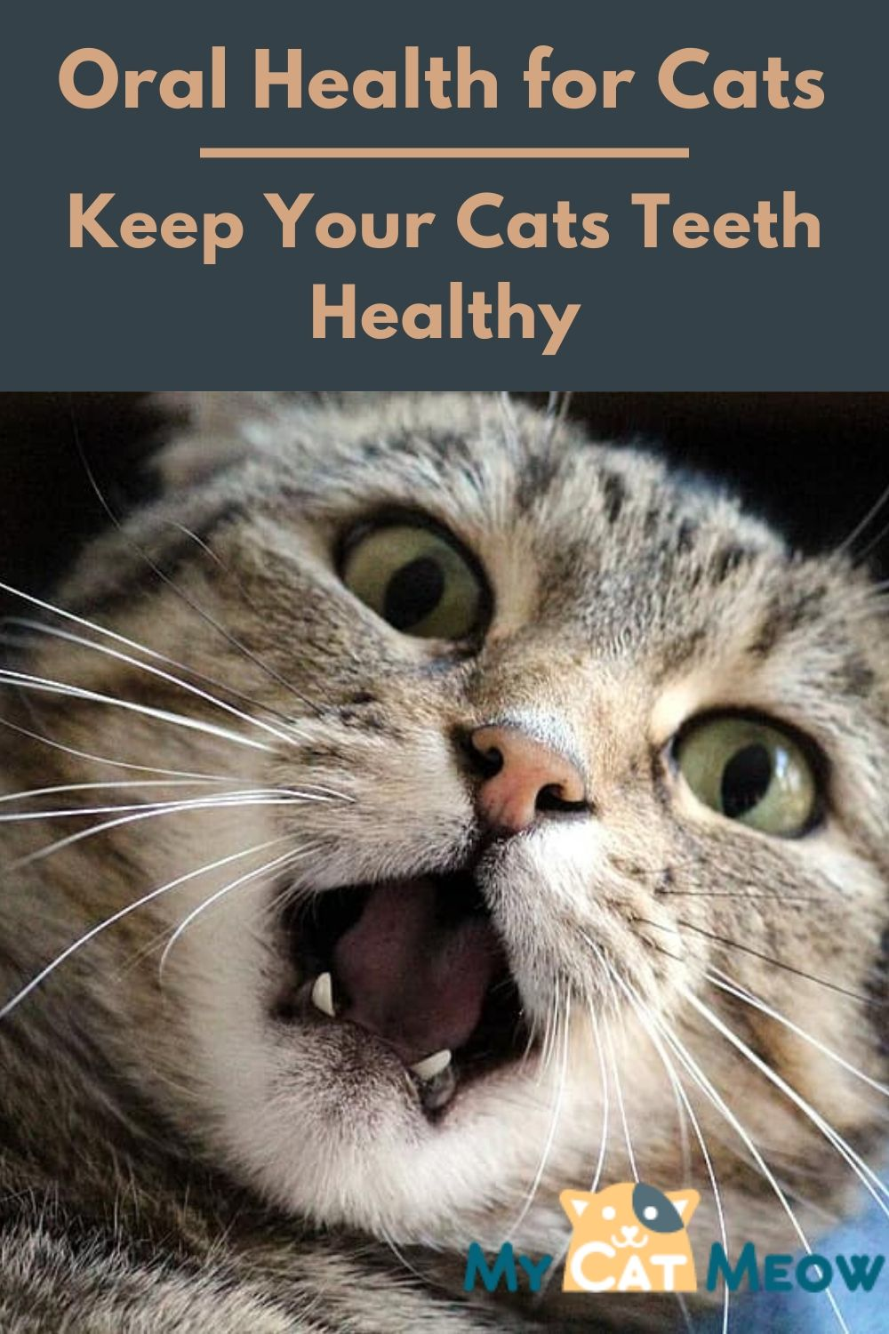 Oral health for cats