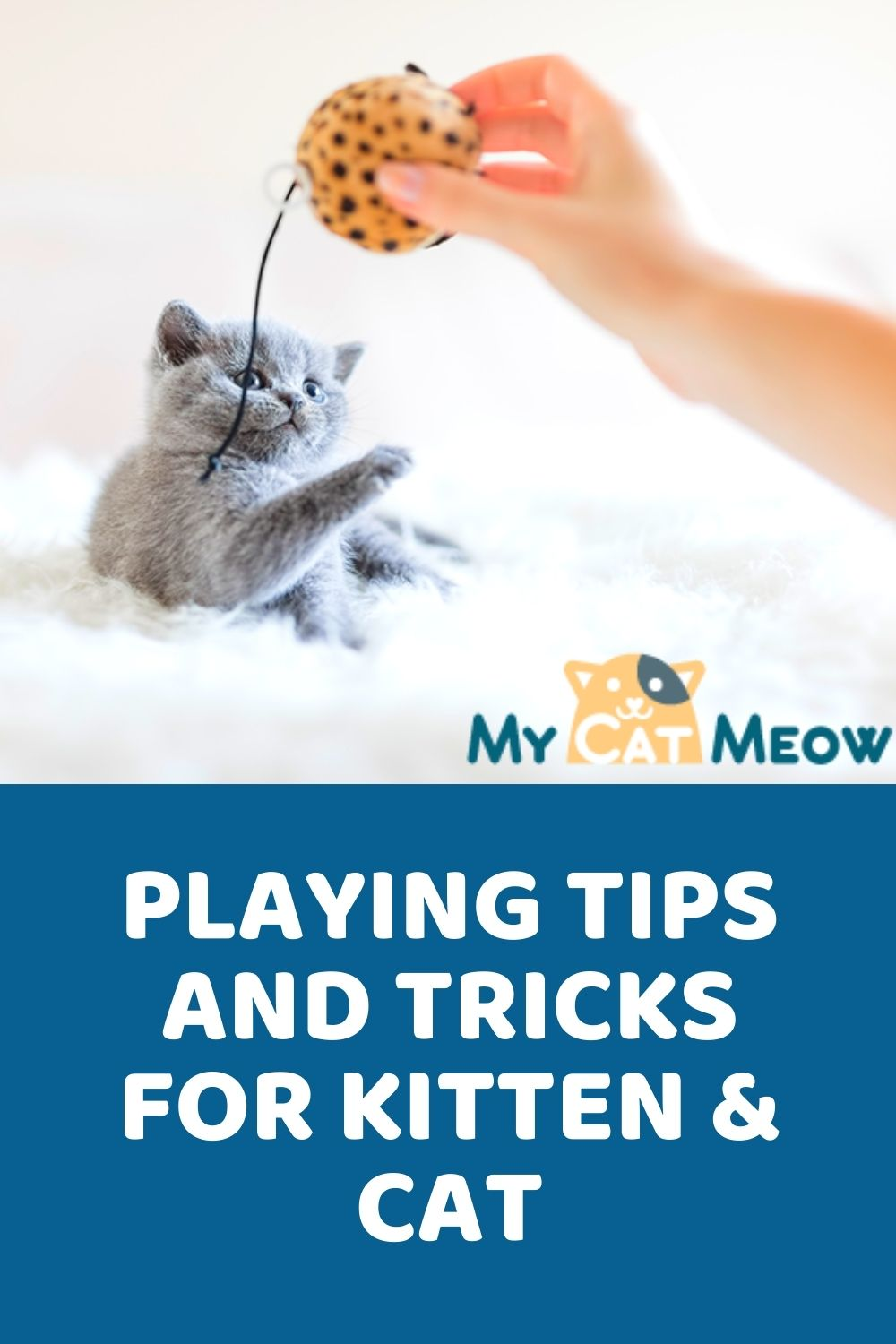 playing tips and tricks for kitten and cat