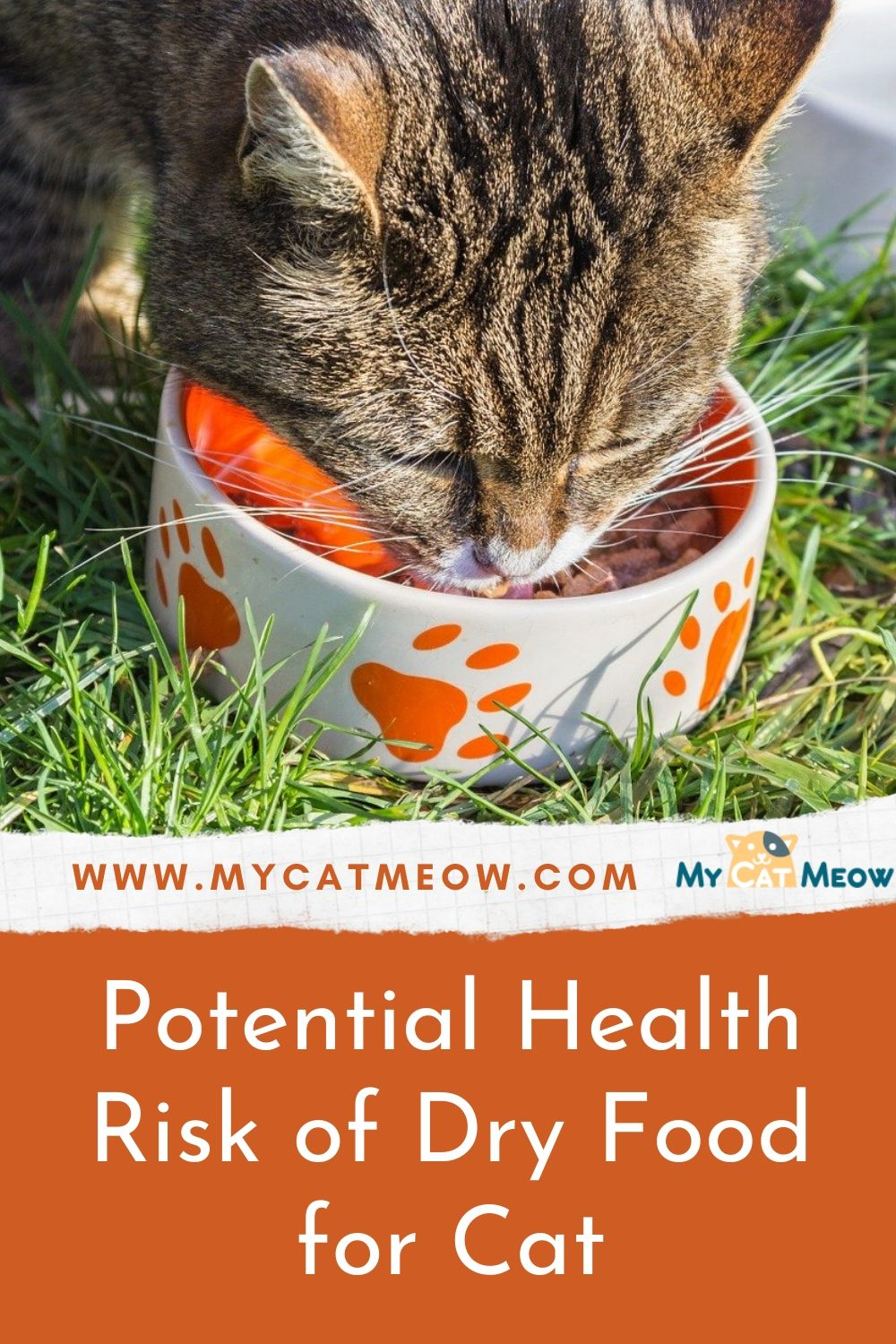 Potential Health Risk of Dry Food for Cat