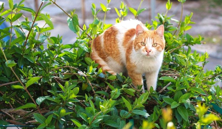 10 Best and Safe Plants to Grow while Having a Cat in your Home