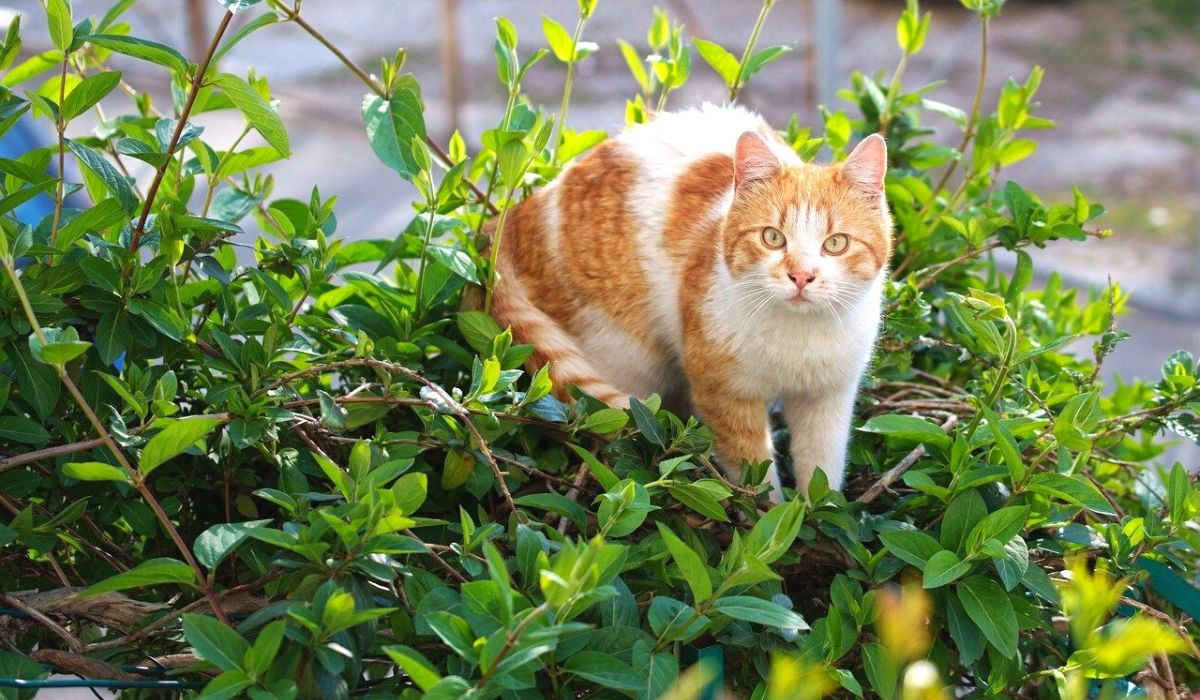 best and Safe Plants to Grow While Having a Cat