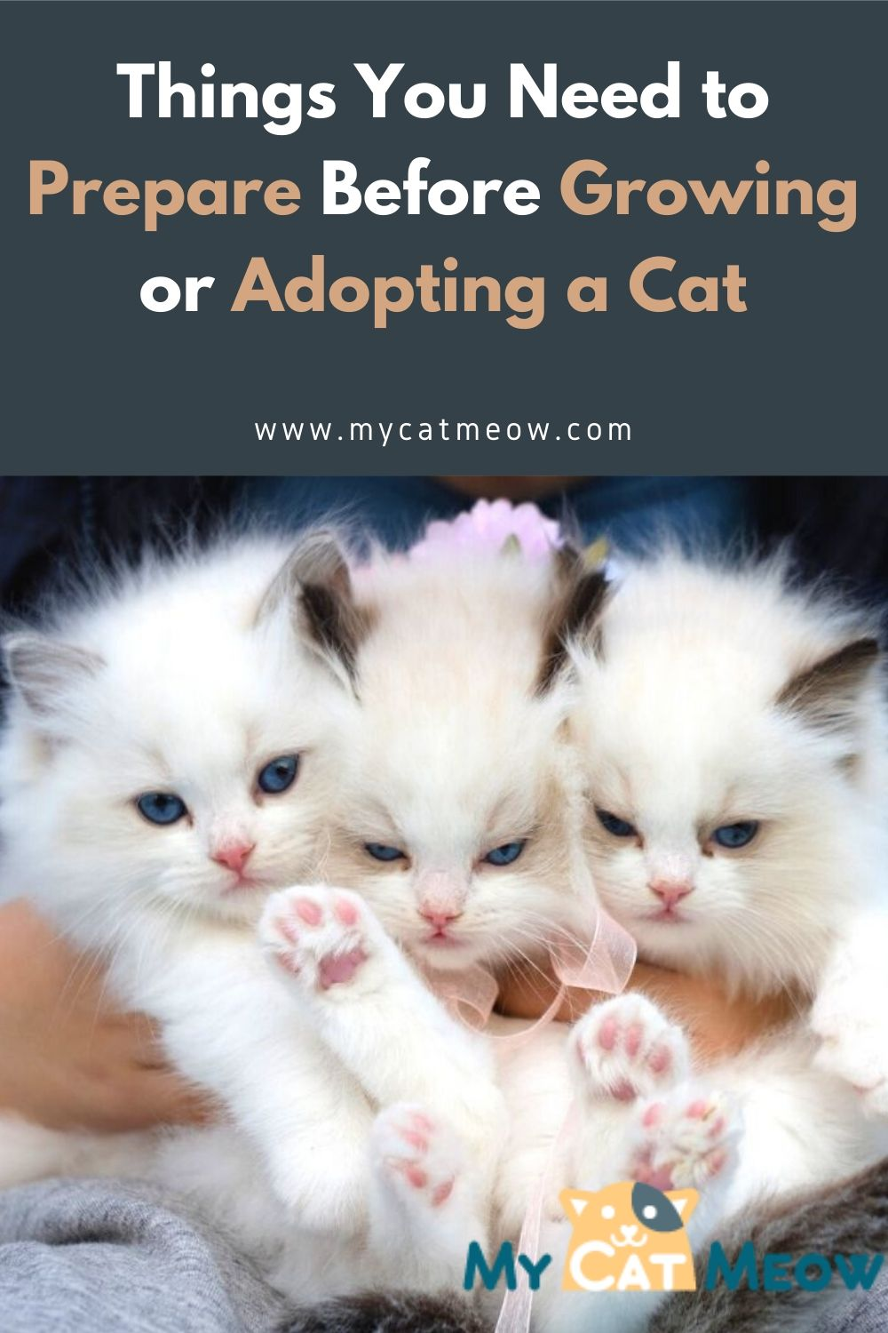Things You Need to Prepare Before Growing or Adopting a Cat