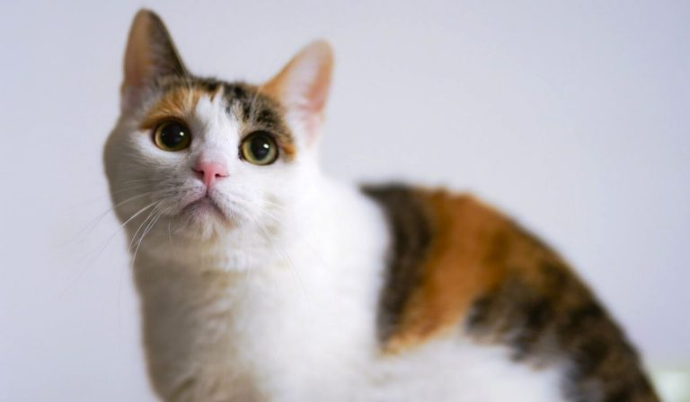 Can Cats have Autism | 7 Similar Autism Signs with Humans and Cats