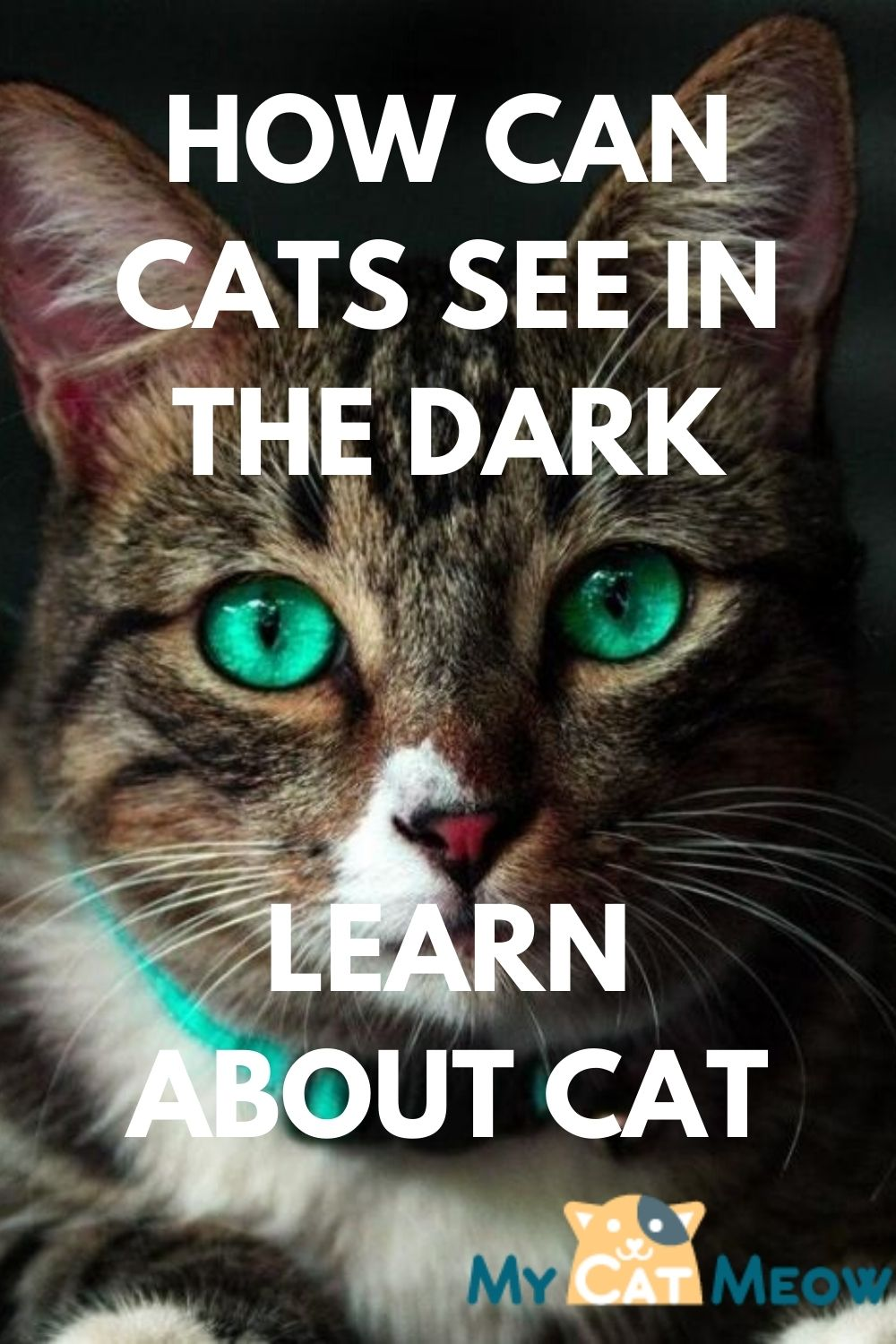 How can Cats see in the dark