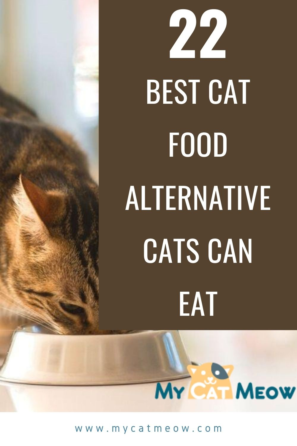 Cat Food Alternatives